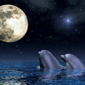 dolphinswithmoon